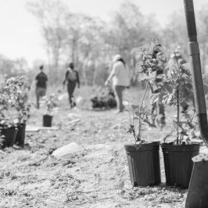 Potted plants and shovels with people standing behind in a field